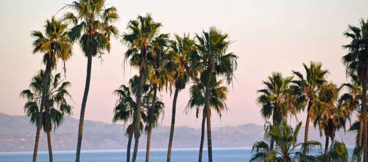 Palm trees with the ocean and mountains in the background during sunset